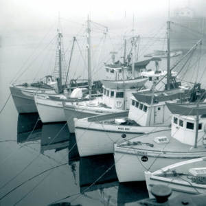 Digby Scallop boats.